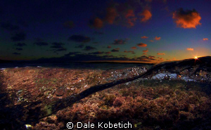 Bottom plant life at sunset by Dale Kobetich