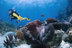 Great Barrier Reef by Steffen Binke
