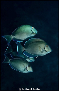 Night dive in Cozumel. by Robert Polo