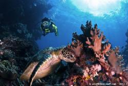Green Seaturtle & Female Diver by Steffen Binke