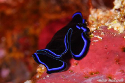 red sea color by Marco Maccarelli
