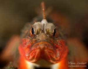 I'm bad!!! One night in the Lembeh Strait! by Mona Dienhart