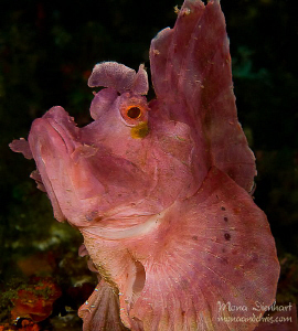 that's my bold side!!!