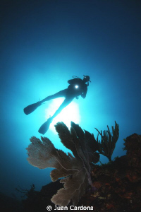 diver by Juan Cardona