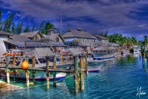 Another view of a sunny and busy day at Stuart Cove's - N... by Steven Anderson