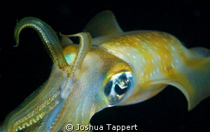 Night time Squid by Joshua Tappert