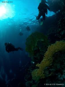 Divers in the Red Sea. by Bea & Stef Primatesta
