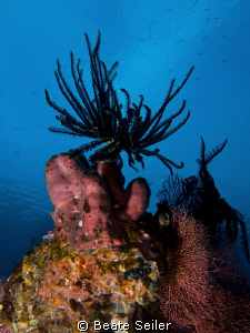 Early morning at the house reef , taken with Canon G10 by Beate Seiler