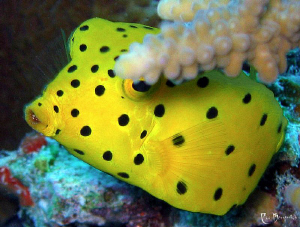 """""""Tales from the past, part I"""" Baby Boxfish is playing th... by Rico Besserdich"""