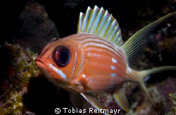 Squirrelfish, Spotted Bay, Utila. Canon EOS 350d, 18-55mm by Tobias Reitmayr