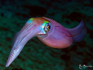 Squid by Rico Besserdich