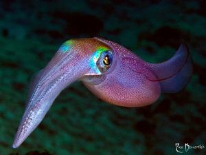 Squid by Rico Besserdich