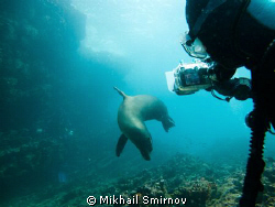 Playfull Sea lion female. Neaк the Cousin rock, Galapagos. by Mikhail Smirnov