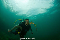 Belinda with weedy sea dragon by Dave Baxter
