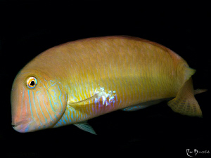 Razorfish by Rico Besserdich