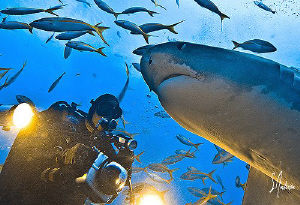 Ah yes ! A visit from the world's sweetest shark - Emma !... by Steven Anderson