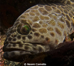 Grouper at Sail Rock by Naomi Cometto