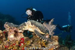 Green turtle munching a sponge, Roatan, D300-Tokina 10 -17mm by Larry Polster