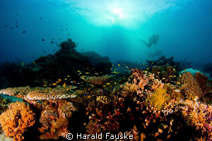 divers drifting over a beautiful coral reef, Sogod Bay Pi... by Harald Fauske