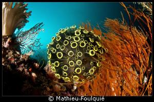 UFO by Mathieu Foulquié