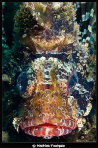 Lionfish face_Lembeh by Mathieu Foulquié