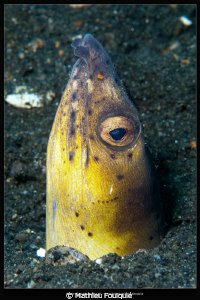 black-finned snake eel by Mathieu Foulquié