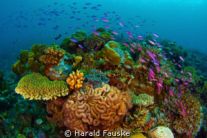 school of fish passing over the coral reef, Sogod Bay in... by Harald Fauske