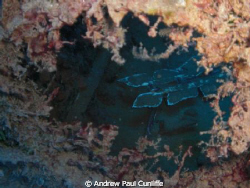 while diving the wrecks outside Puerto del Carmen, Lanzar... by Andrew Paul Cunliffe