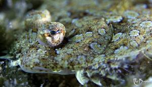Flounder by Rico Besserdich