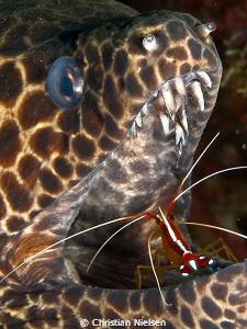 At the dentist. Seraya, Bali. Olympus E330, 50mm macro, 2... by Christian Nielsen