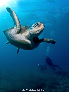 Flying in. Friendly green turtle, my wife and diveguide a... by Christian Nielsen