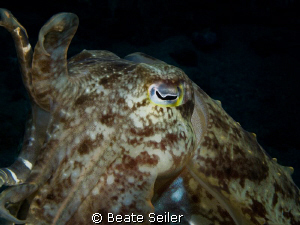 Cuttlefish , taken with Caonon G10 and UCL165 by Beate Seiler