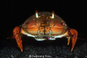 Crab by Jagwang Koo