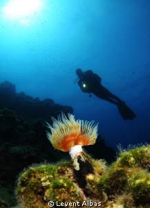 Diver by Levent Albas