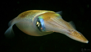 """Squid. Slightly cropped to make it """"wide screen"""" ;-) Inc... by Rico Besserdich"""