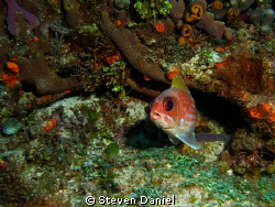 Long Spine Squirrel Fish with three Arrow Crabs by Steven Daniel
