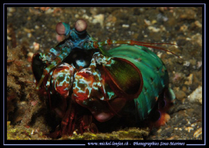 Manta Shrimp in Lembeh Strait... :O)... by Michel Lonfat