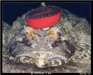 Crocodile fish...:) What is on the top of its head?  Tak... by Ahmet Yay