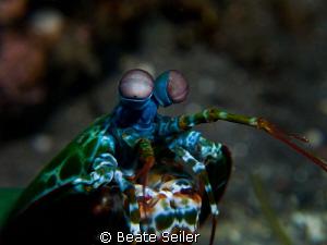 Mantis shrimp by Beate Seiler
