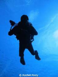 Silhouette of a friend, Sony, fantastic dive to the Blue ... by Rachel Parry