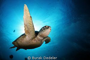 Get out of my way! by Burak Dedeler