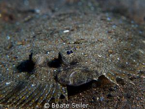 Flounder by Beate Seiler