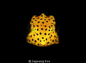Yellow Box Fish by Jagwang Koo