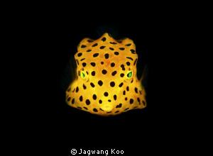 Yellow Box Fish by Jagwang Koo