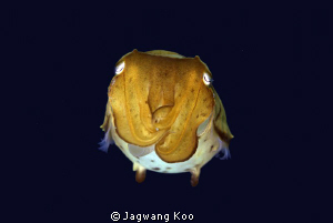 Cuttle Fish by Jagwang Koo