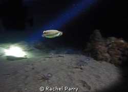 On a night dive last night with Manta Diving Lanzarote, w... by Rachel Parry