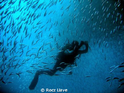 Diver inside the swirling sardines at Pescador Island, Mo... by Rocz Llave