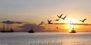 Pelicans at the sunset_Los Roques by Mathieu Foulquié
