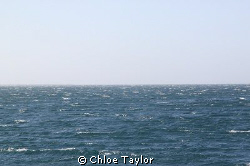 A windy day at the Abrolhos Islands. by Chloe Taylor