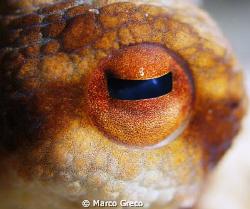 Big Eye by Marco Greco